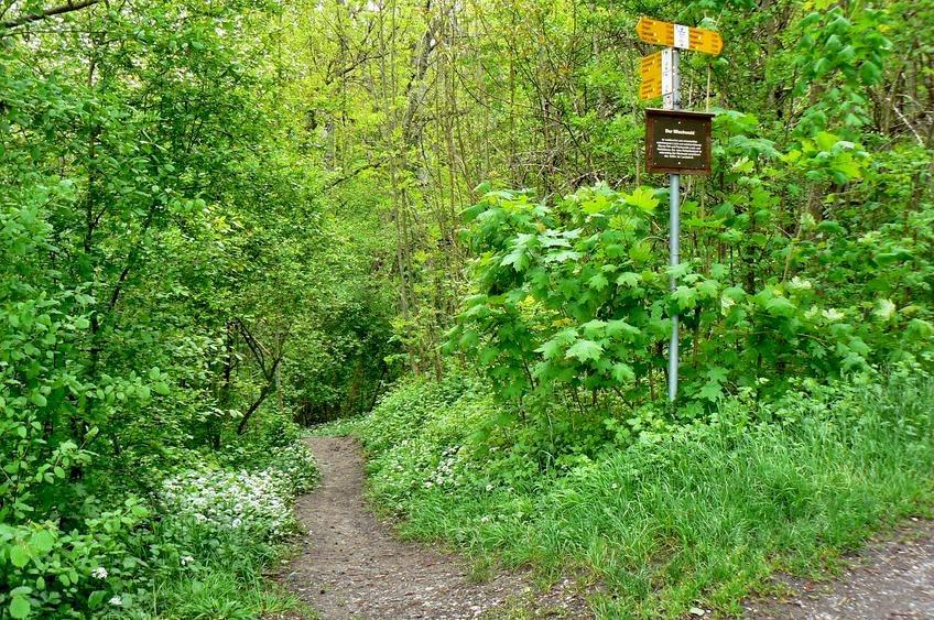 Weg in die Klingenbachschlucht